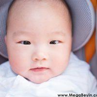 Japon Bebekler Yerini Evcil Köpeğe Bırakıyor