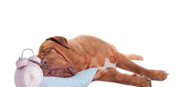 Uyku Süresi – Günde Kaç Saat Uyumalısınız?