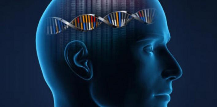 Zeka Genleri – Bilim İnsanları Zeka Genlerini Buldu