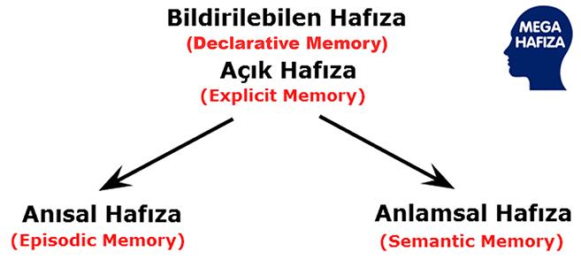 Bildirimsel Hafıza / Açık Hafıza / Bildirilebilen Hafıza - Declarative Memory / Deklaratif Hafıza