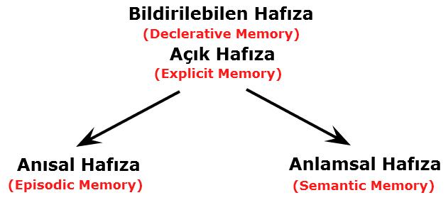 bildirilebilen hafıza - bildirimsel hafıza - anısal hafıza - semantik hafıza nedir - declerative memory