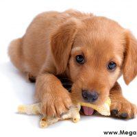 Köpek – Kemirmeyi ve Isırmayı Neden Sever