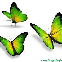 Pusulalı kelebek