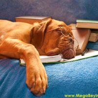 Uyku ve Hızlı Öğrenme -Konsantrasyon İçin Çek Bir Uyku