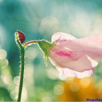 Doğa ve İnsan – Doğadan Uzaklaşmak Gözü Bozuyor